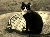 Вишенский кот